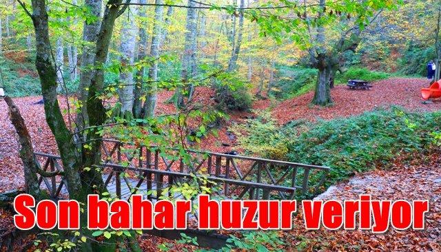 Zonguldak'ta son bahar renkleri