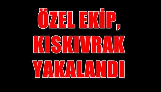 ÖZEL EKİP, KISKIVRAK YAKALANDI