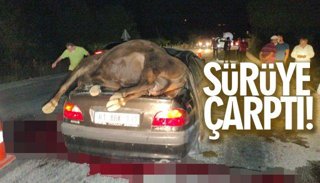 Büyükbaş hayvan sürüsüne çarptı: 2 yaralı