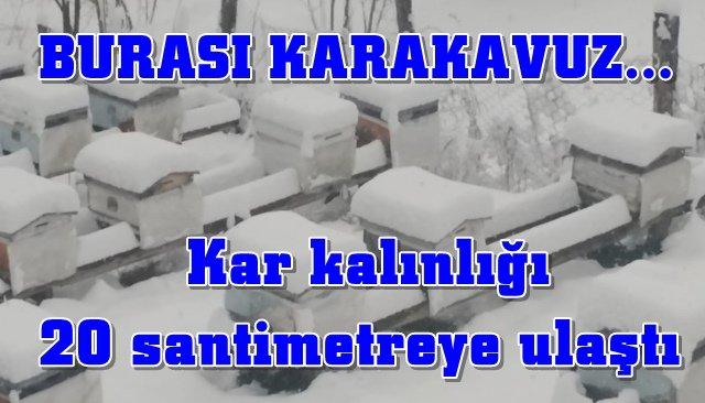 Karakavuz beyaza büründü