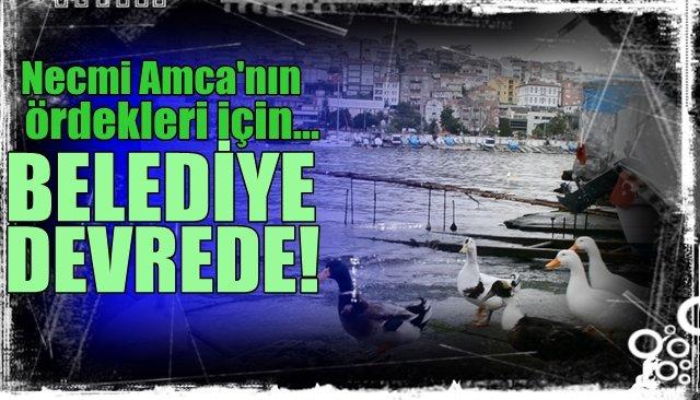 NECMİ AMCA'NIN ÖRDEKLERİNE BELEDİYE BAKIYOR