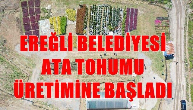 12 Çeşit ata tohumu üretip halka dağıtılacak