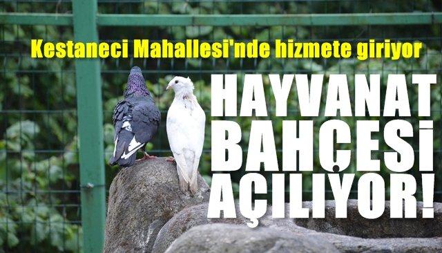 HAYVANAT BAHÇESİ AÇILIYOR
