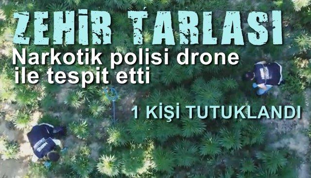Narkotik polisi, zehir tarlasını drone ile tespit etti…