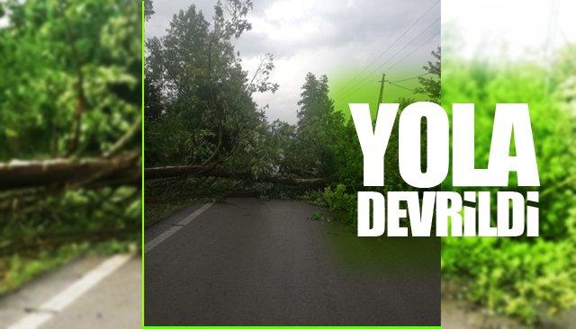 Yola devrilen ağaç köye giriş ve çıkışı kapattı