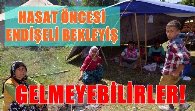 FINDIK ÜRETİCİSİ KARA KARA DÜŞÜNÜYOR..