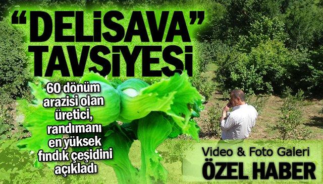 """ÜRETİCİDEN """"DELİSAVA"""" TAVSİYESİ"""
