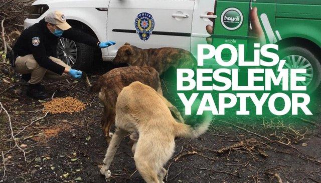 POLİS, BESLEME YAPIYOR