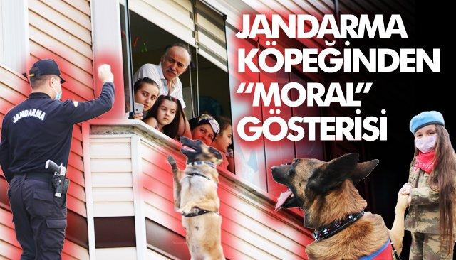 Bomba arama köpeği Şila, evde kalan vatandaşları gösterileriyle etkiledi