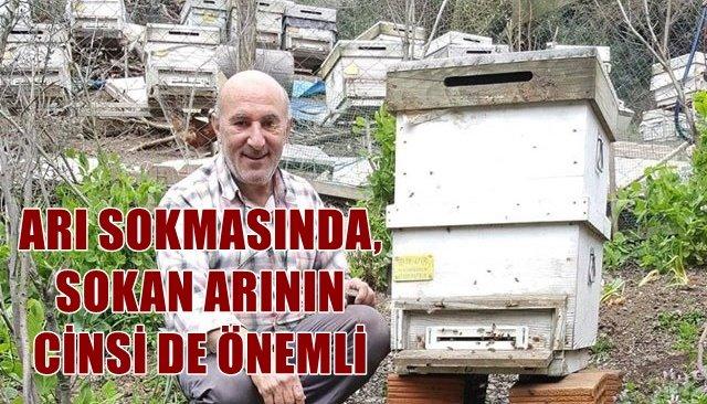 ARI SOKMASINDA, SOKAN ARININ CİNSİ DE ÖNEMLİ