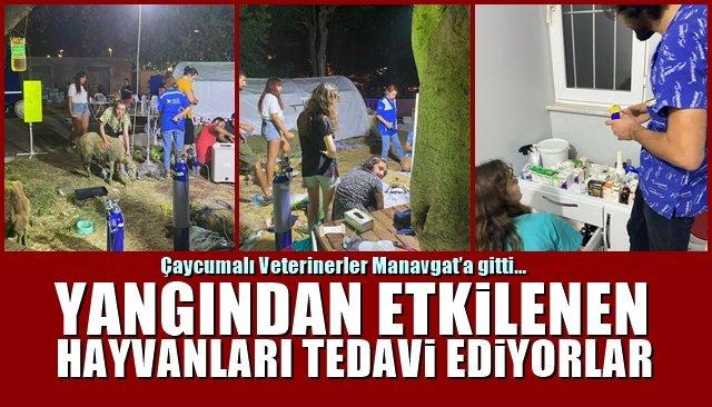 Çaycumalı Veterinerler Manavgat'a gitti… HAYVANLARI TEDAVİ EDECEKLER