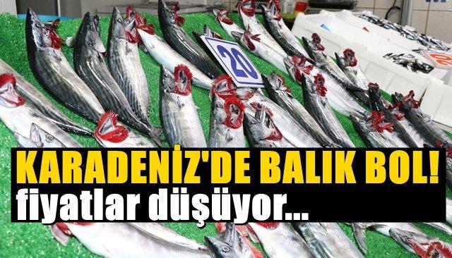 Karadeniz'de balık bol!