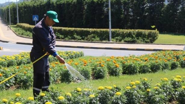 Ereğli Belediyesi, çiçek üretiminde rekor hedefliyor