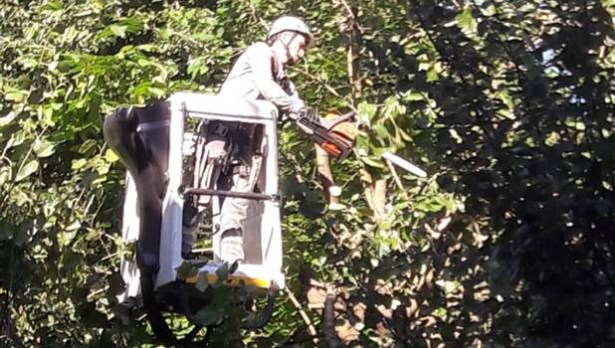 Ağaç dallarına değen elektrik tellerinden yangın çıktı