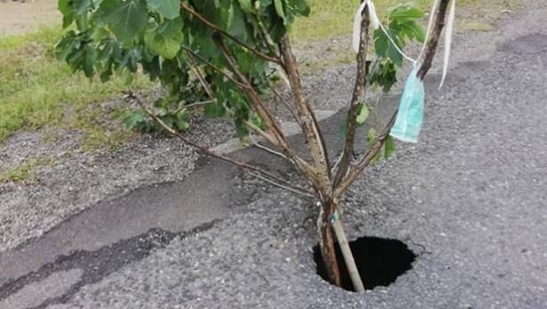 Kazaya karşı, incir ağaçlı tedbir