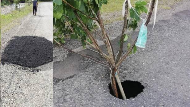 Yola ´dikilen´ incir ağacı kaldırıldı